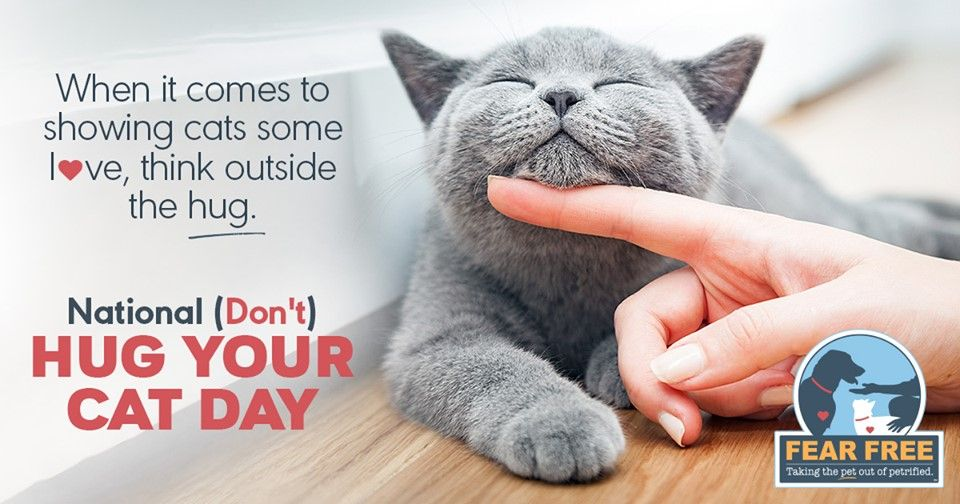 It's National Hug Your Cat Day! But did you know most cats