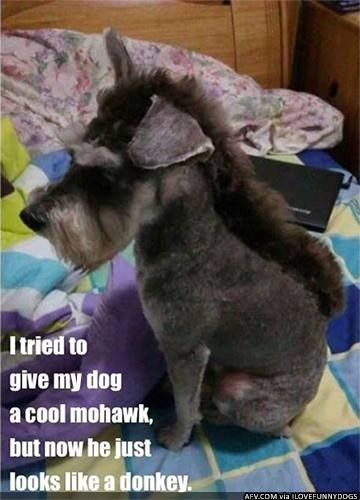 Funny Dog Shaved W Mohawk Now Looks Like Eore The Donkey From Winnie