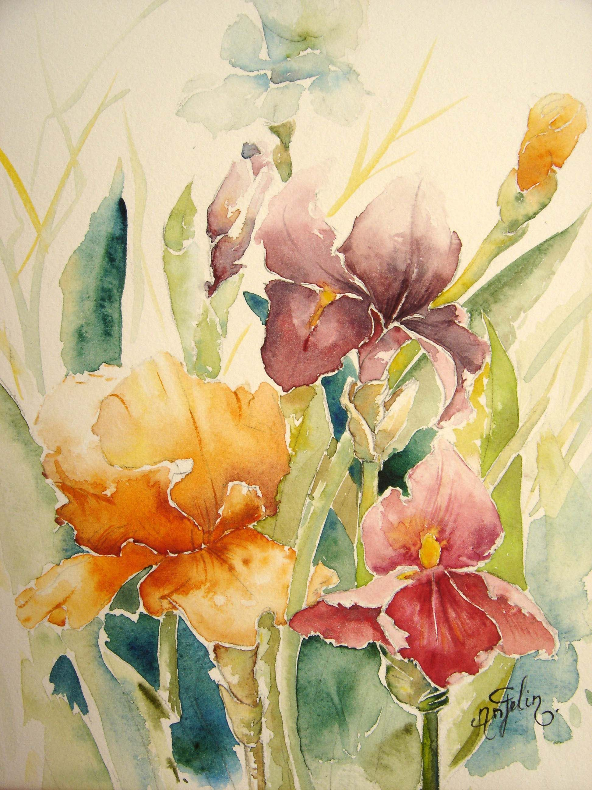 fleurs d'hiris | Fleurs impériales, majestueuses, pétales aériens parfois ...