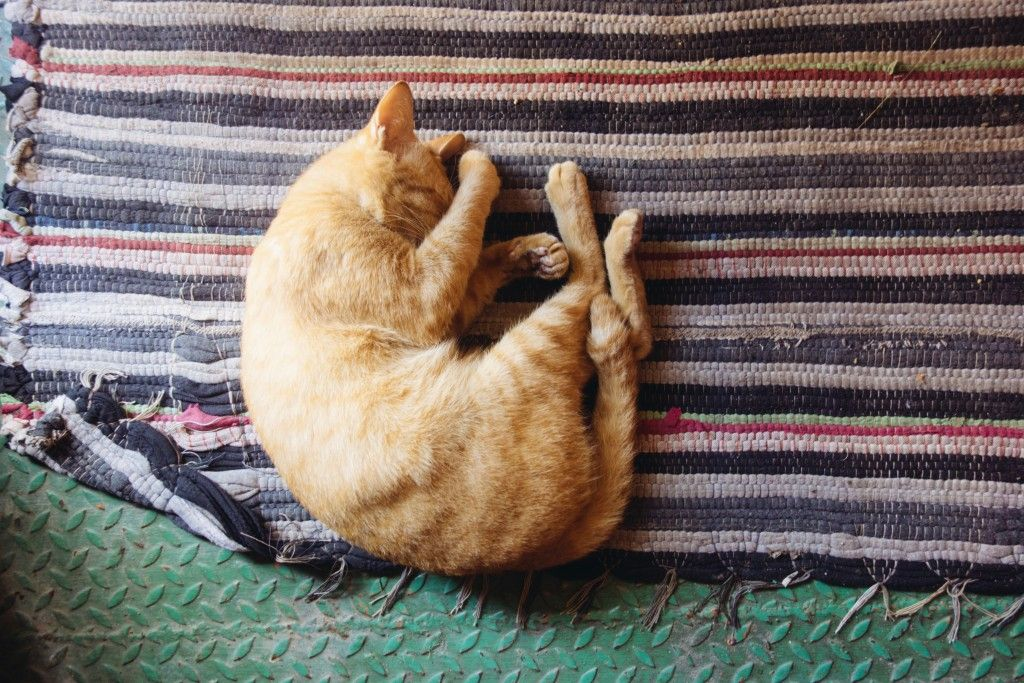 What to Do If Your Cat Is Constipated Cat sleeping