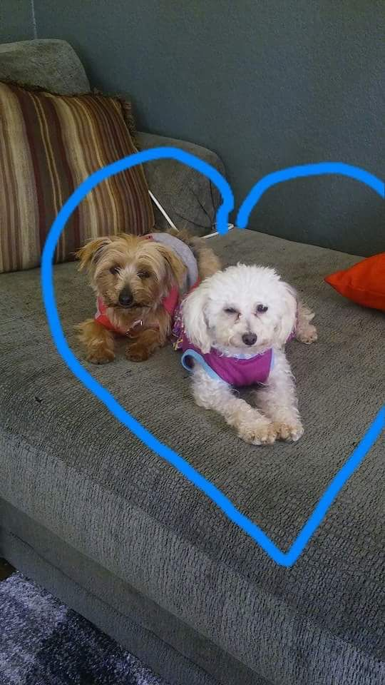 My two puppy mill survivors love them to death