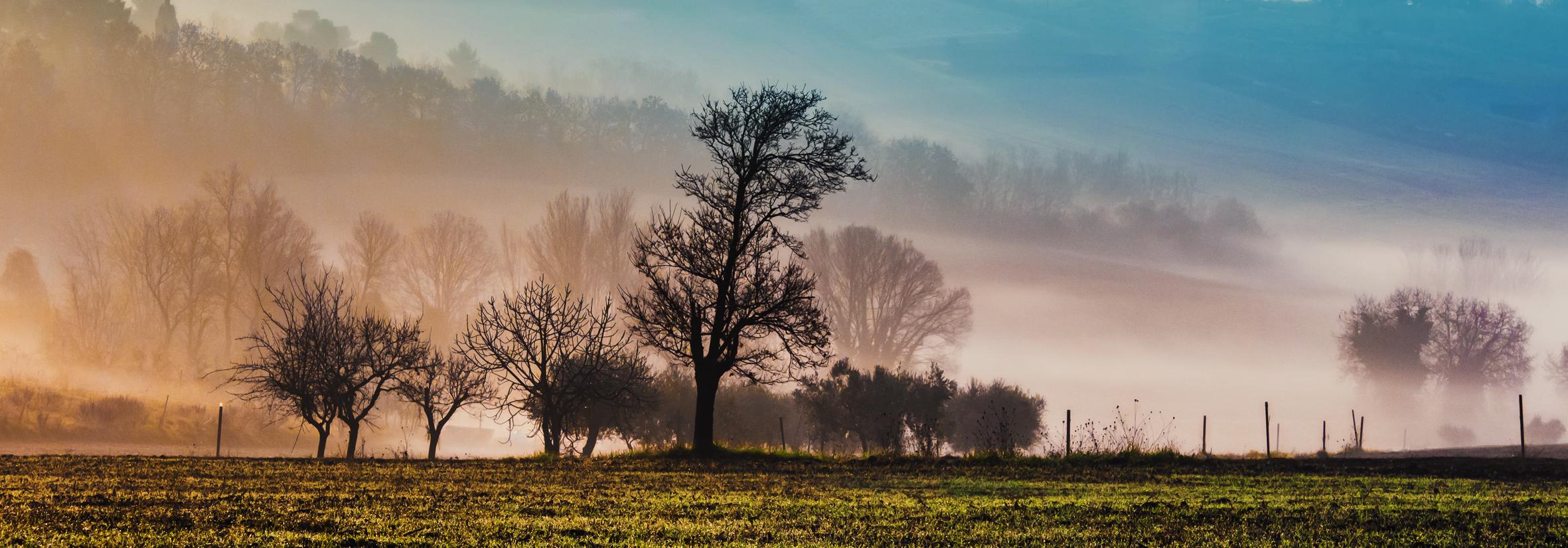 la mattina, in campagna...