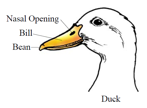 For example, a duck\'s head (shown in Figure 1) differs from a ...