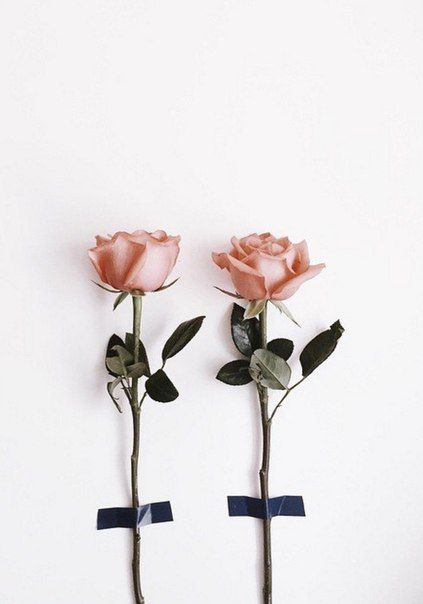 One for me and one for you haati chai flora fauna pinterest beautiful flowers mightylinksfo Images