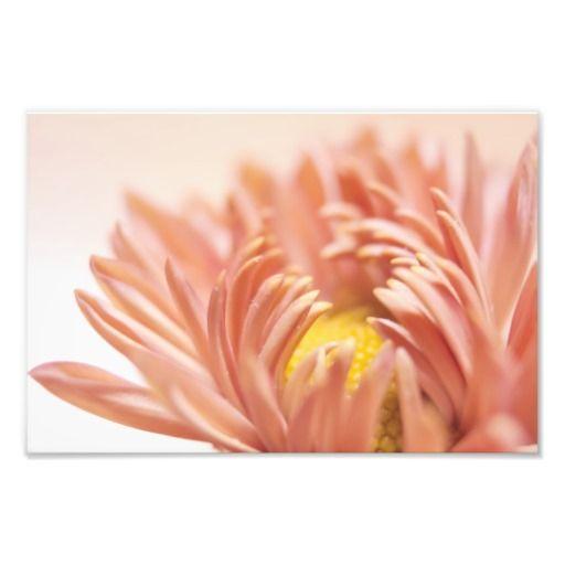 Peach Flower Photograph