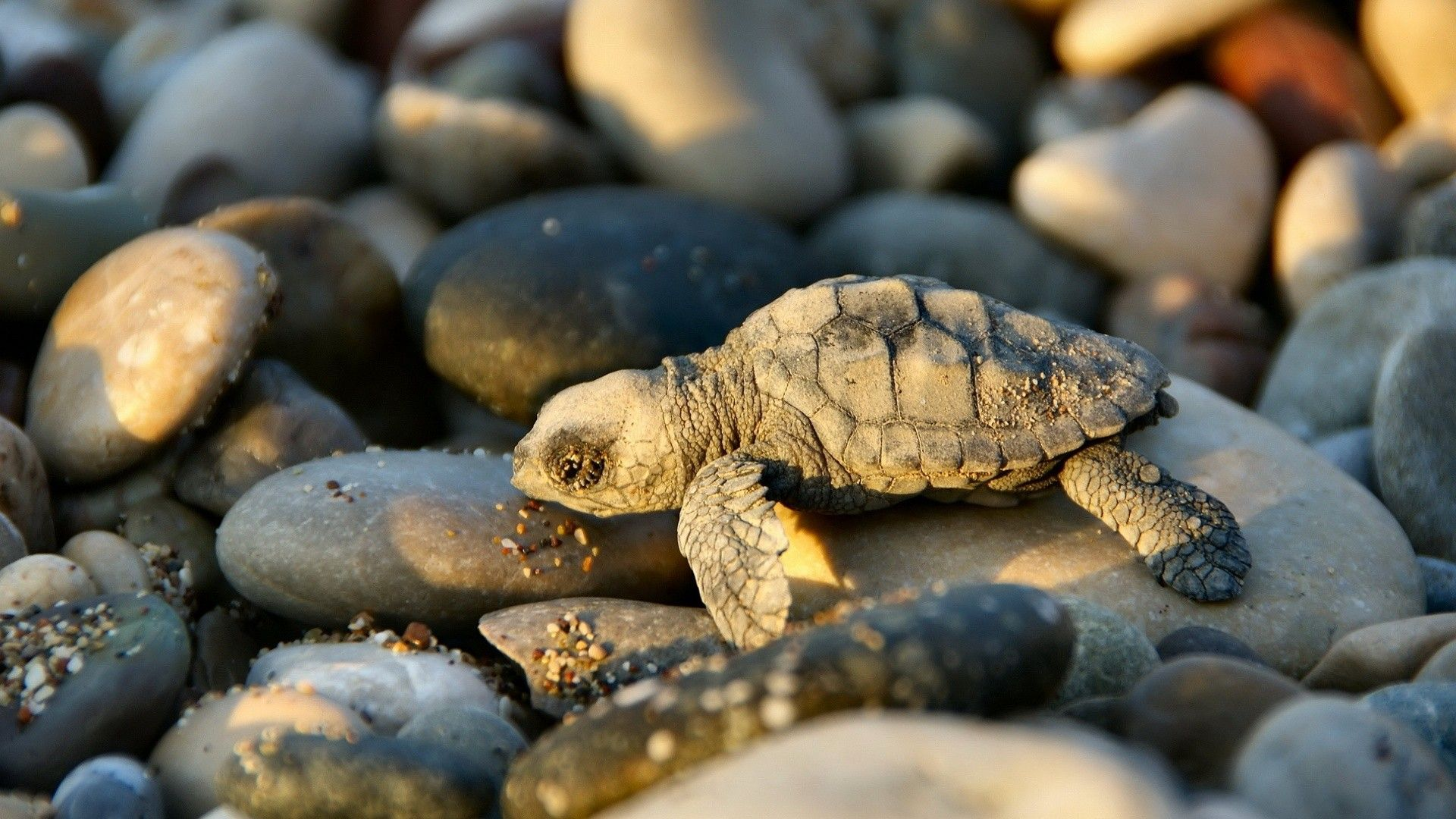baby sea turtle a· baby animals picturesbaby
