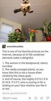 17 Tumblr Posts, die so dumm, aber so lustig sind - Kelly Blog #animalcaptions