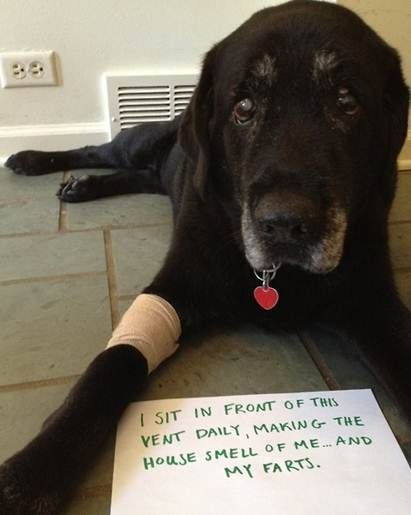 12 Dogs Share Their Most Embarrassing Confessions Dog Shaming