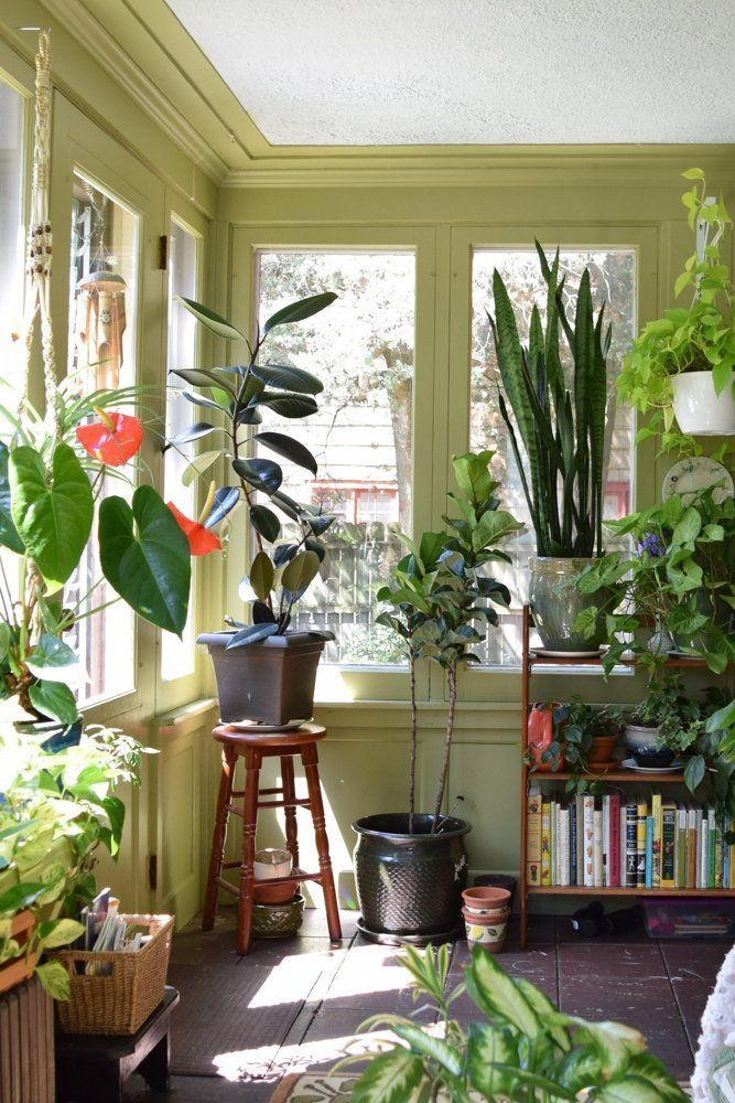 Natasha and the plant filled sunroom boho style for Zimmerpflanzen wohnzimmer