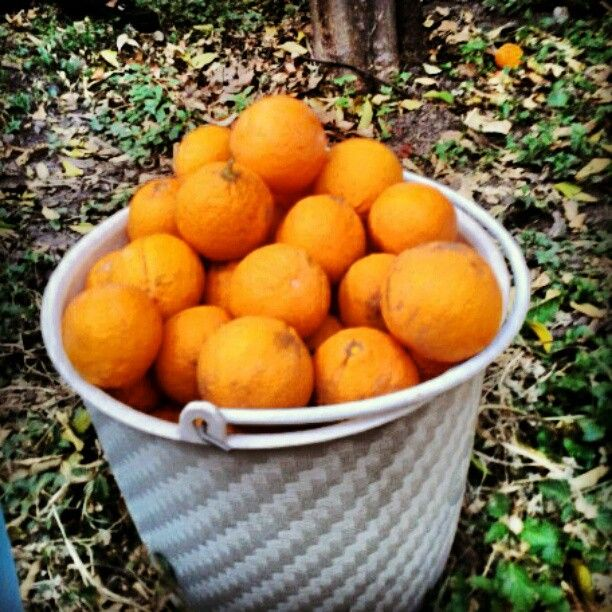Oranges. just for me. Grandma´s house.