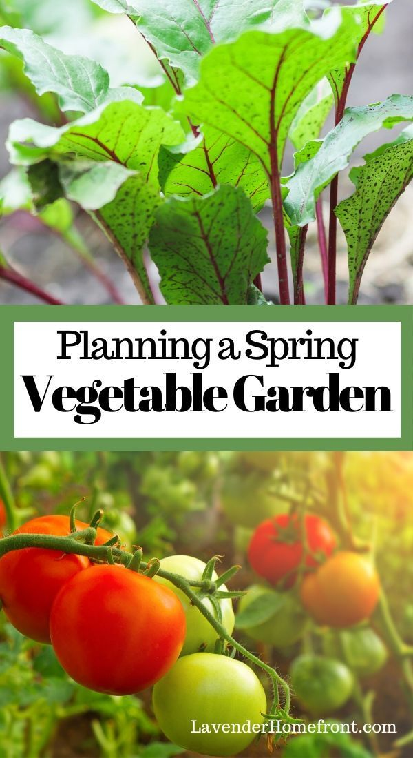Read my tips for planning a spring vegetable garden this year. Learn what should be considered before you plant! #gardeningtips #beginnergardening #vegetablegarden #gardengrowing