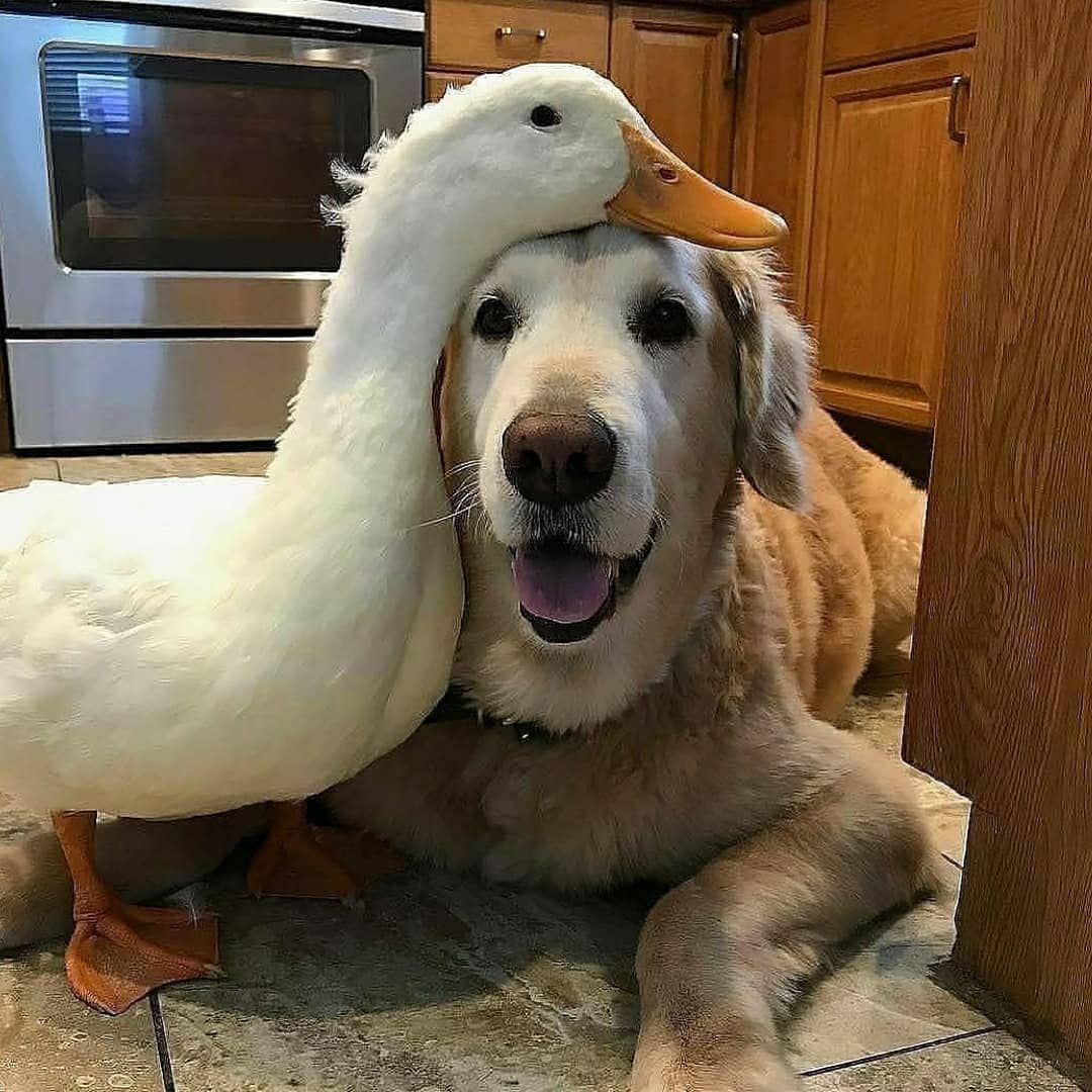 Best Friends Forever Double Click To See More Dog Puppies Pets Animals Funny Paw Best P Animals Friendship Cute Animals Unlikely Animal Friends