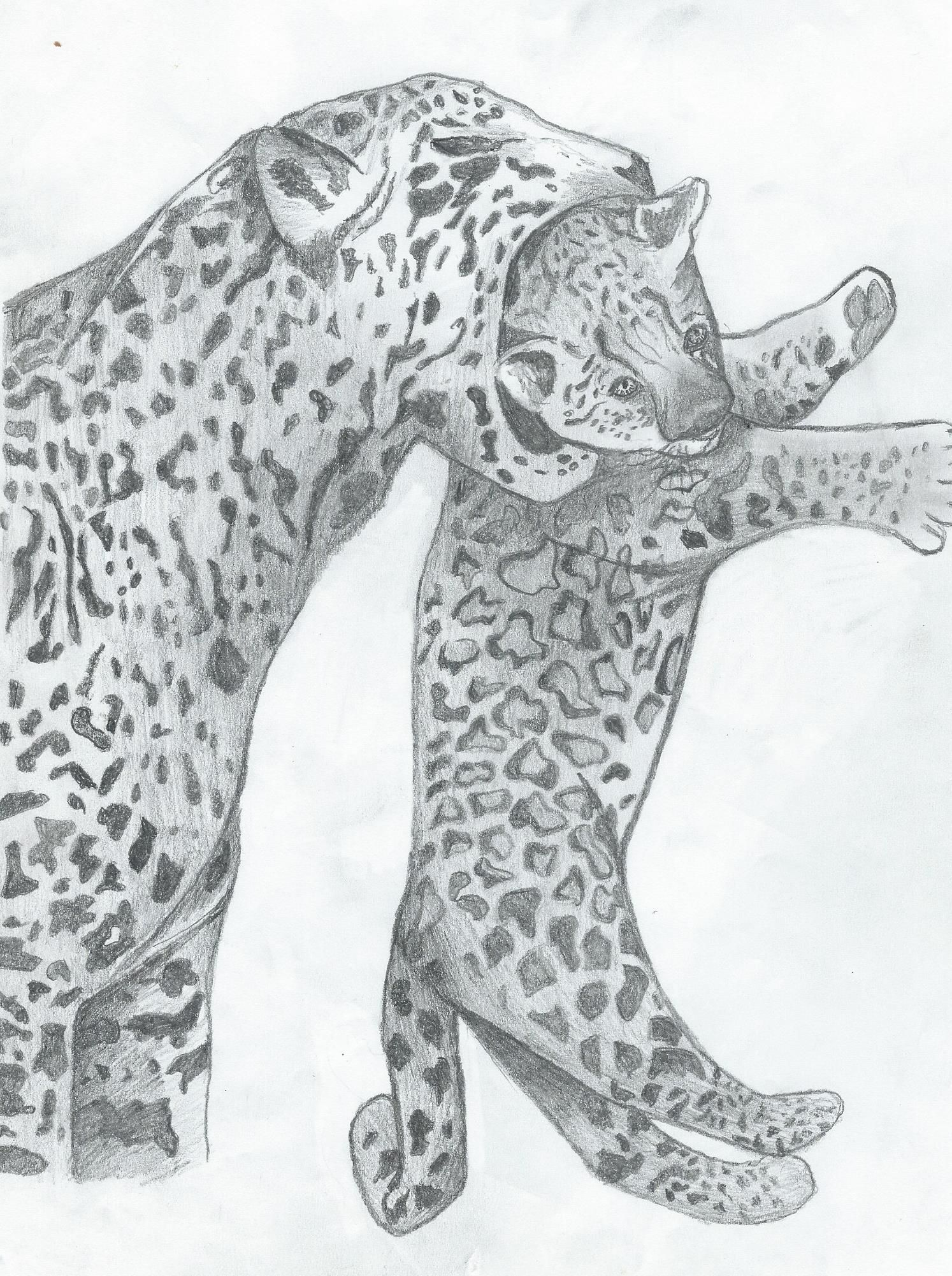 tips how to draw a cheeta