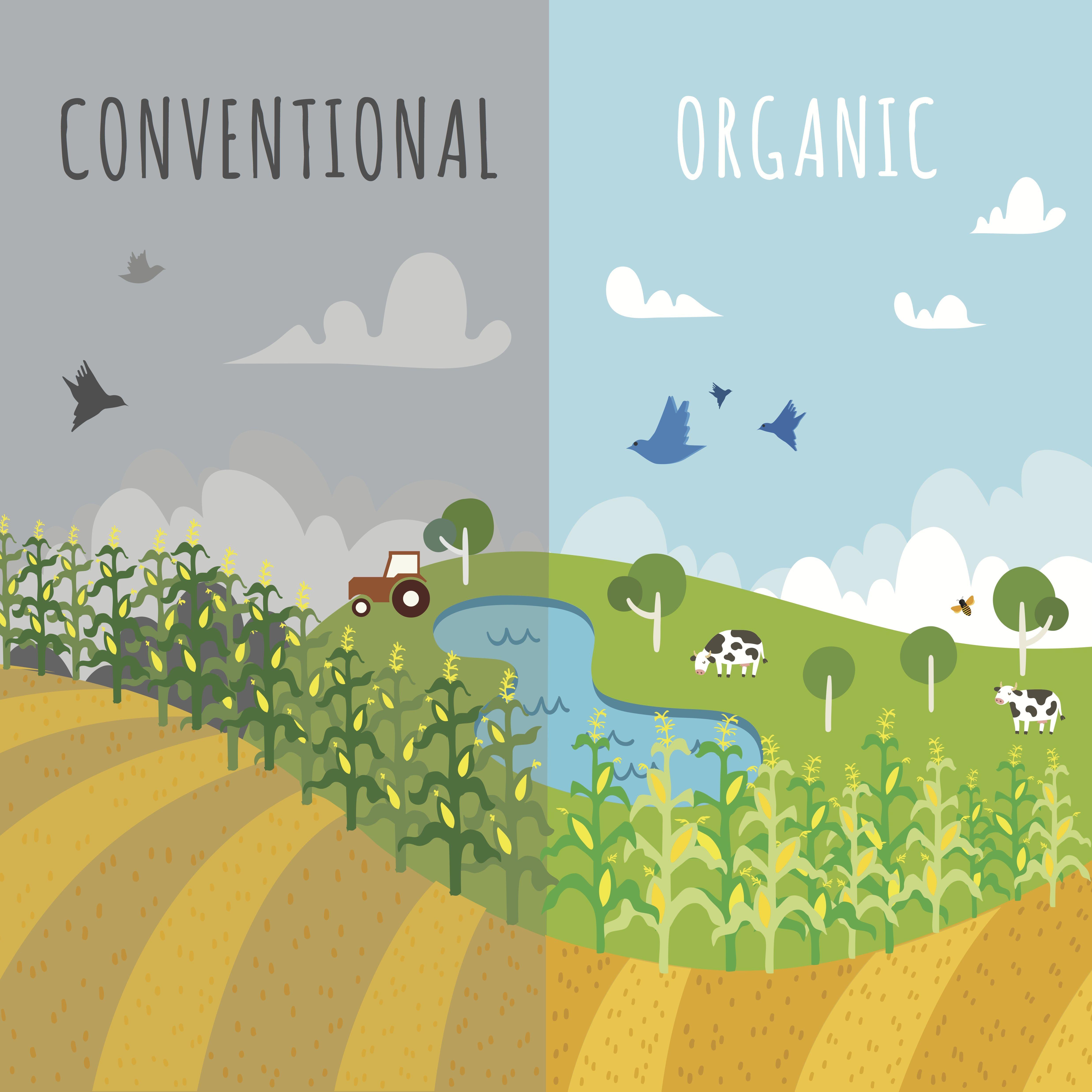 Organic Can Feed The World Organic Farming Organic Pesticide Aquaponics System