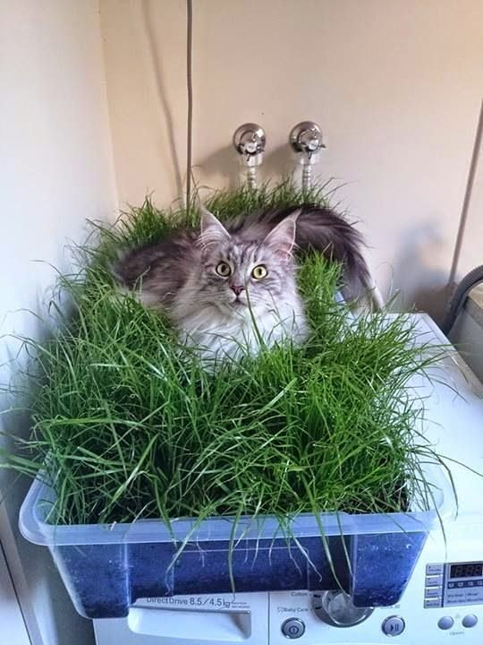 """""""""""We grew some grass for our indoor cat"""""""":"""