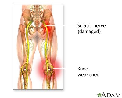 Nerves In The Human Leg Overview The Sciatic Nerve Is Located In