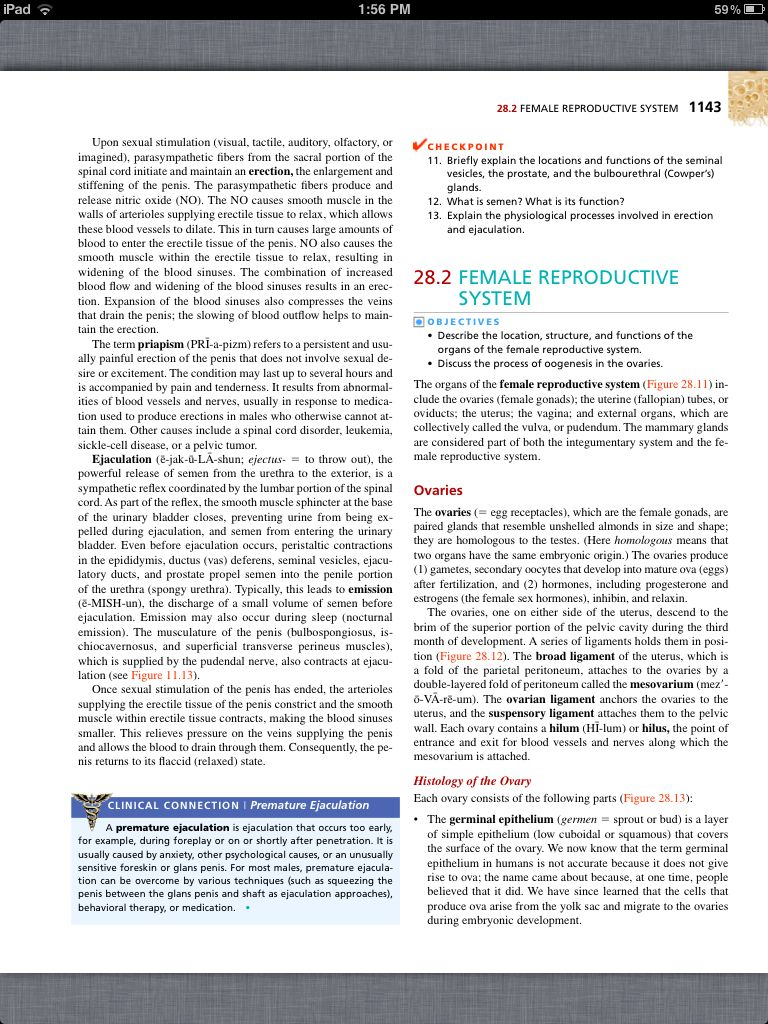 Principles of Anatomy and Physiology, Chapter 28, The Reproductive ...