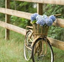 Definitely a great way to pretty up a bicycle. The flowers are so pretty, my favorite shade of blue!