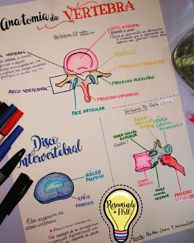 Estudando a Anatomia da vértebra desenhando! #anatomialove ...