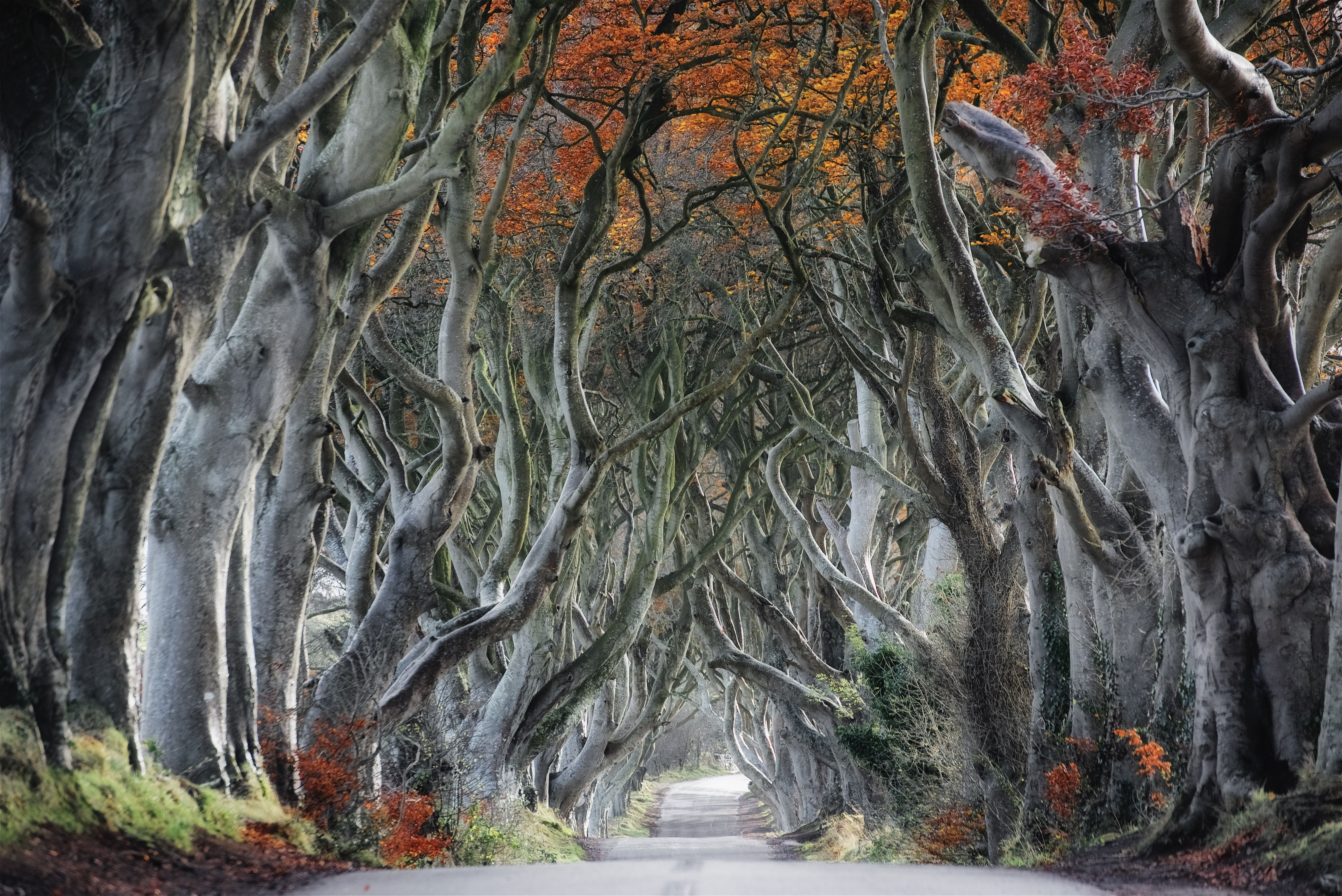 The dark hedges in Autumn United Kingdom [OC][5847 3904