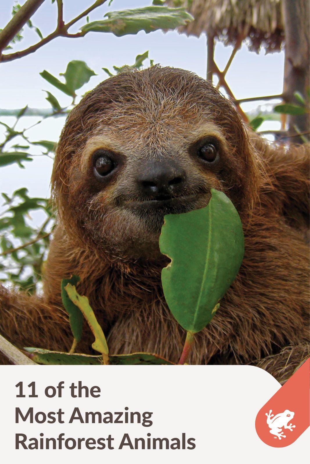11 Amazing Rainforest Animals