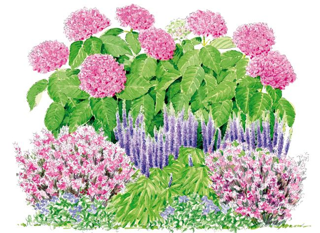Comment bien associer l 39 hortensia you me 39 together for Association plantes jardin