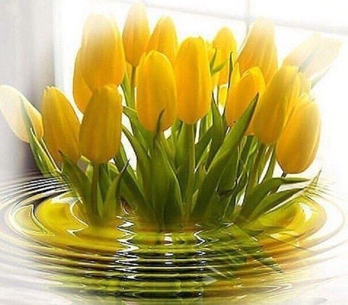 Доброе утро открытка с тюльпанами, добрым