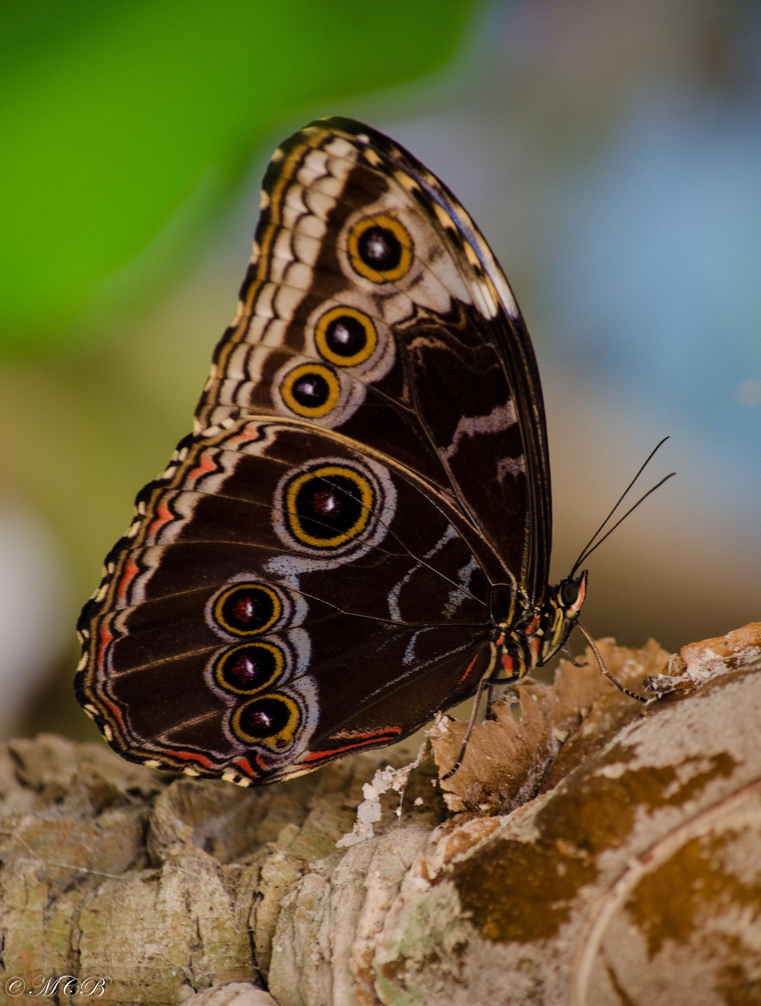 Butterfly by Matthias  on 500px