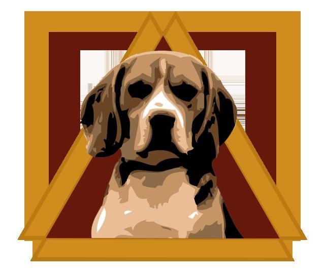 Adopt Triangle Beagle Rescue On Beagle Rescue Beagle Adoptable