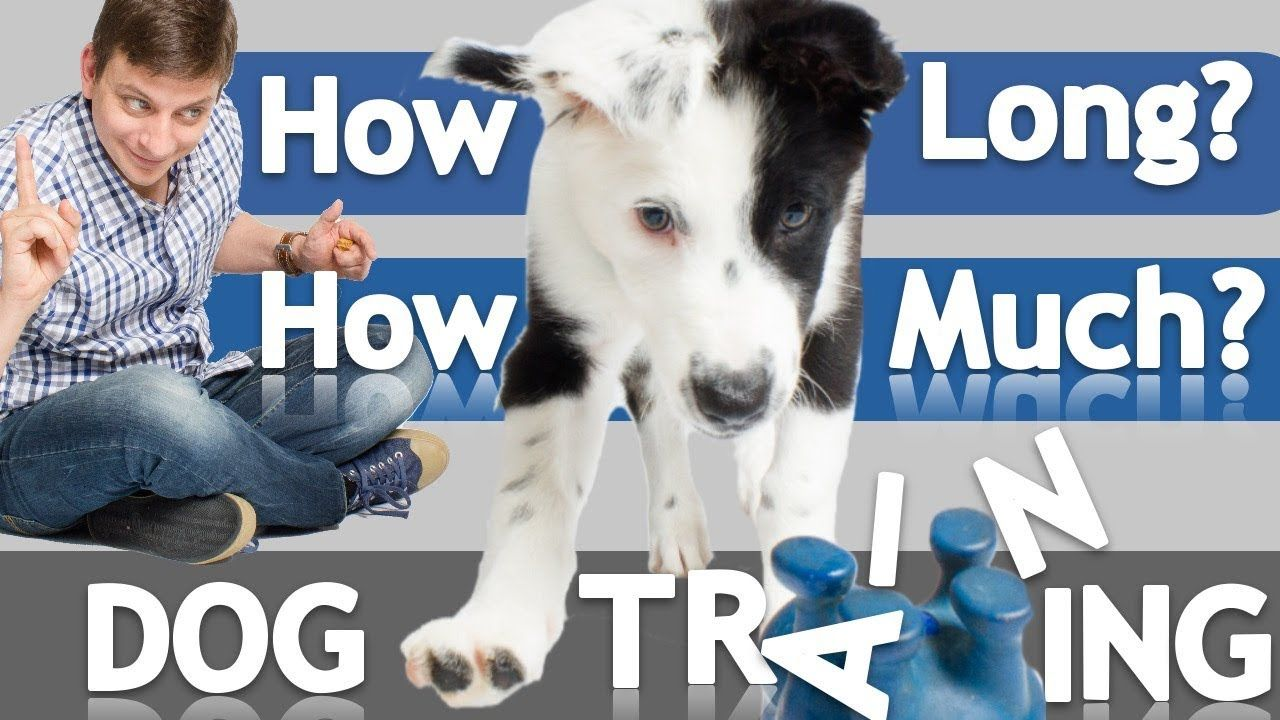 How Often And How Long Should You Train Your Dog Dog Training