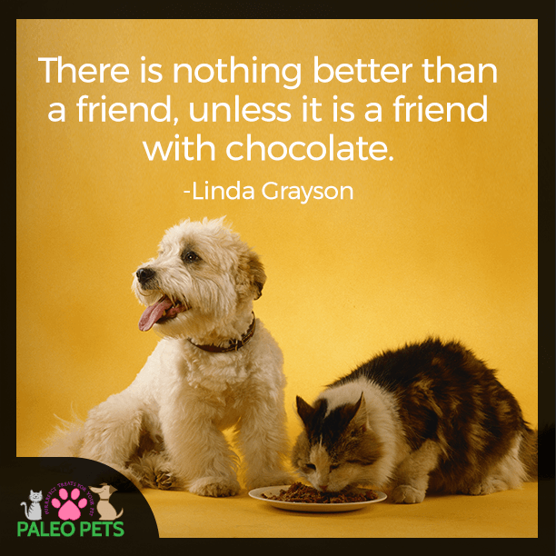Friends Are The Best Cats Dogs Pets Quotes Paleopets Animal Quotes Pets Cute Animals
