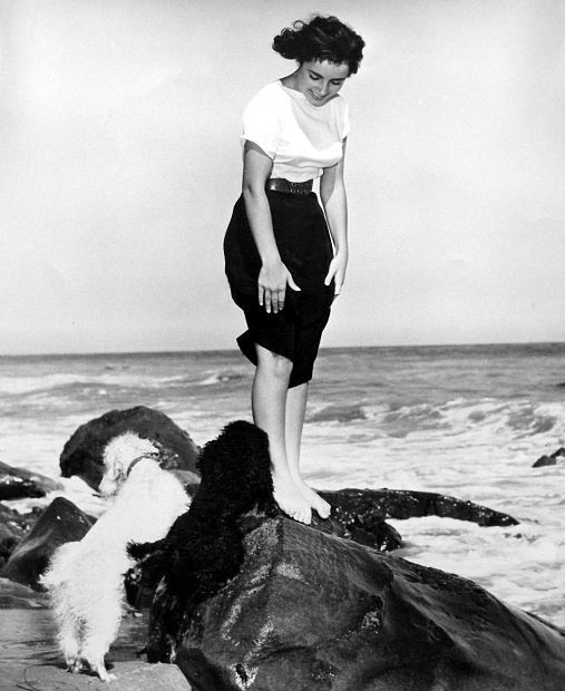 Vintage Elizabeth Taylor   Young elizabeth taylor, Elizabeth taylor, Old hollywood