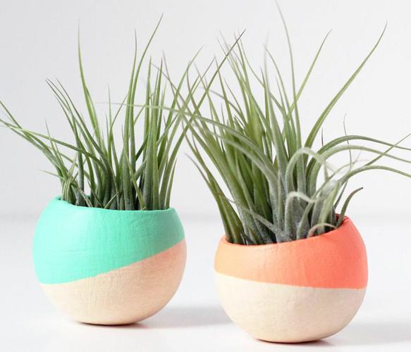 Mini Air Plant Pod Set of 2 - Melon and Mint | Air plants, Plants ...