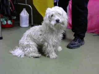 Petharbor Com Animal Shelter Adopt A Pet Dogs Cats Puppies Kittens Humane Society Spca Lost Found Animal Shelter Kittens Humane Society