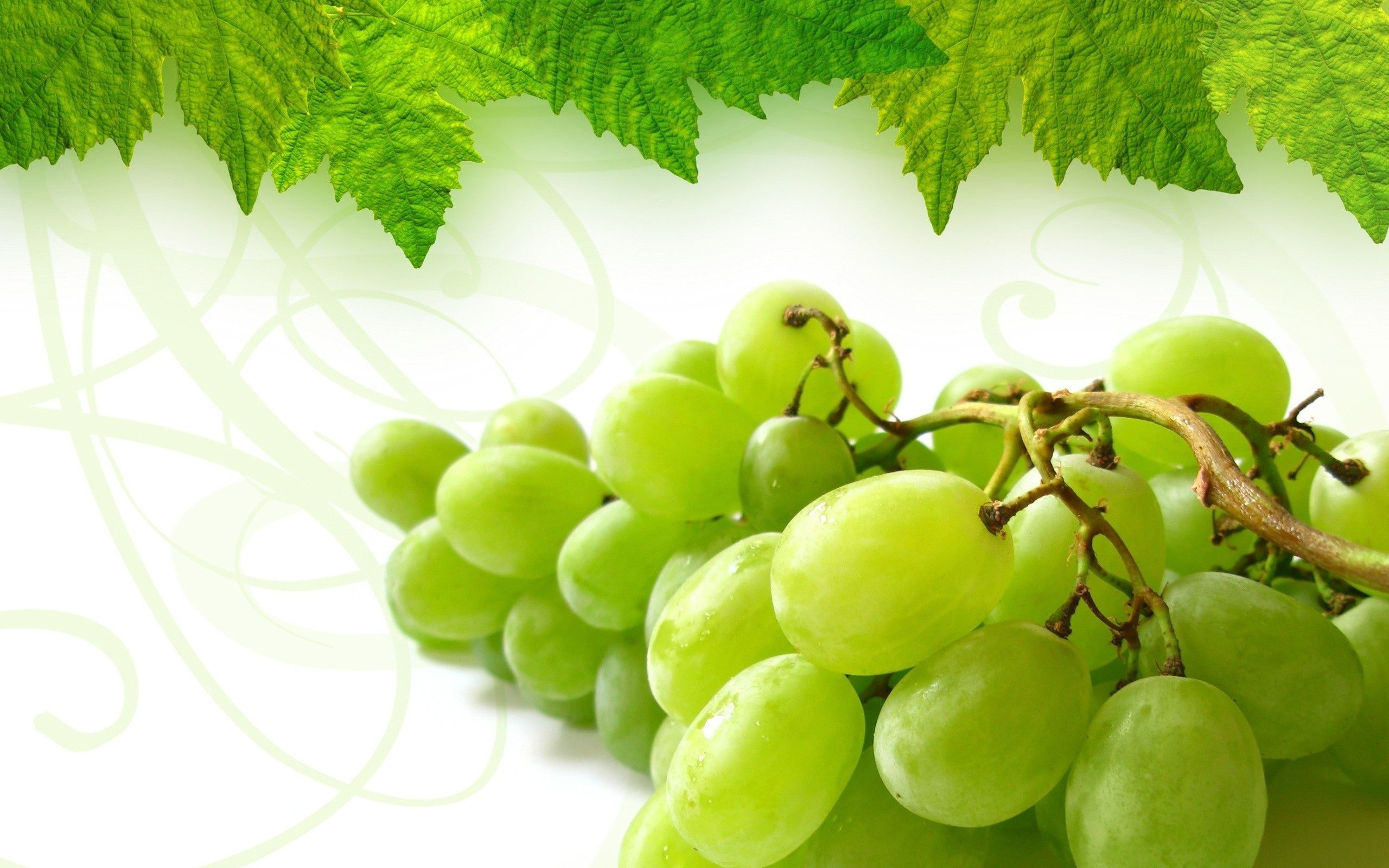 Free download grapes hd wallpaper for laptop DHD Wallpaper