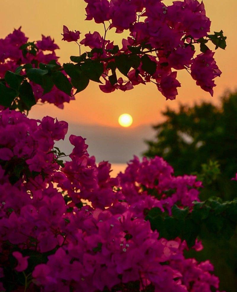 Pin By Monika Ginoto On Flowers Beautiful Nature Wallpaper Beautiful Flowers Wallpapers Flowers Photography