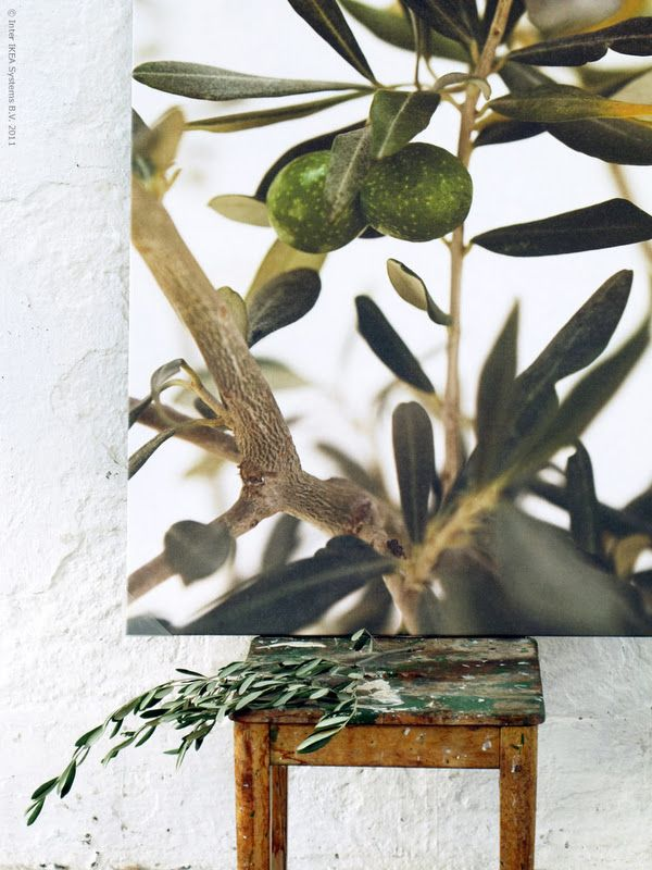 Blow up a photo of the olive trees in the garden and make ...