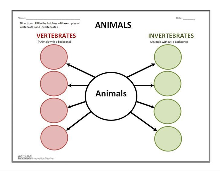 Vertebrates and Invertebrates Graphic Organizer | TpT Science ...