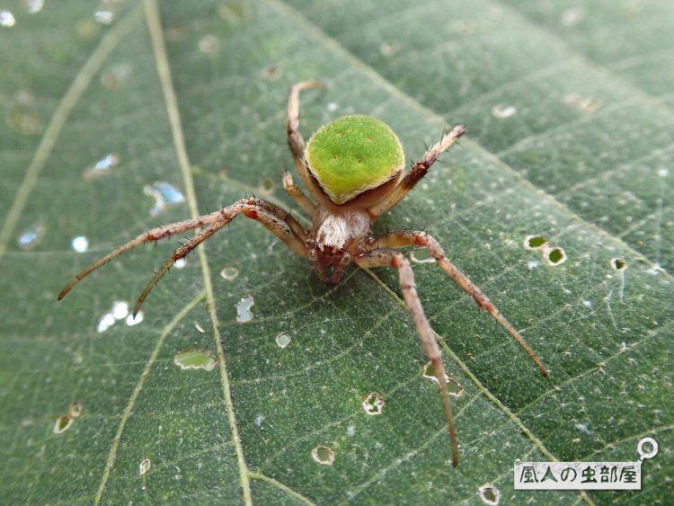 ボード 蜘蛛 Spider のピン