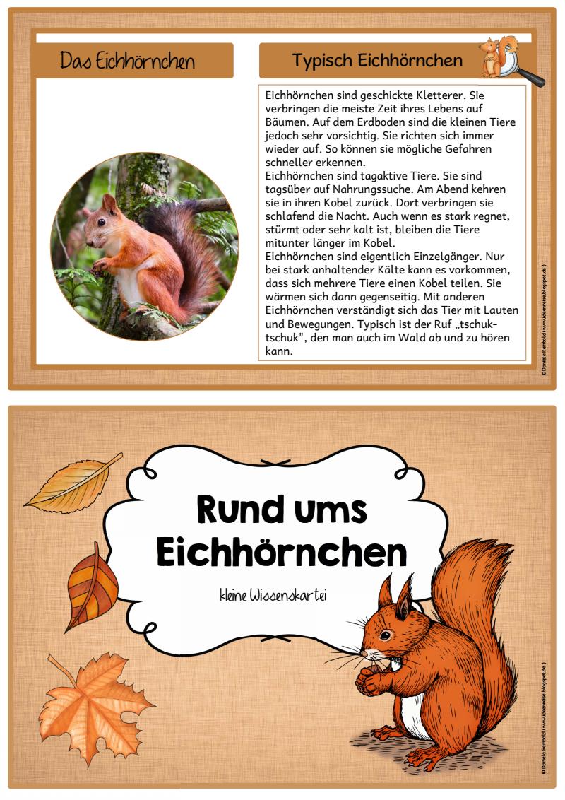 Seite 6 von 7 science eichh rnchen projekte im for Projekte im kindergarten herbst