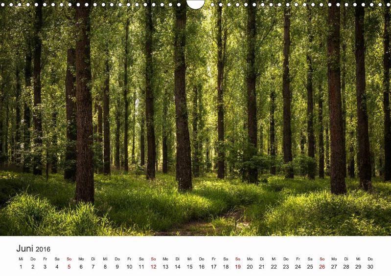 W A L D - CALVENDO Kalender von Heiko Gerlicher