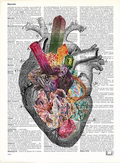 Human Heart Minerals And Stones Heart Anatomy Art