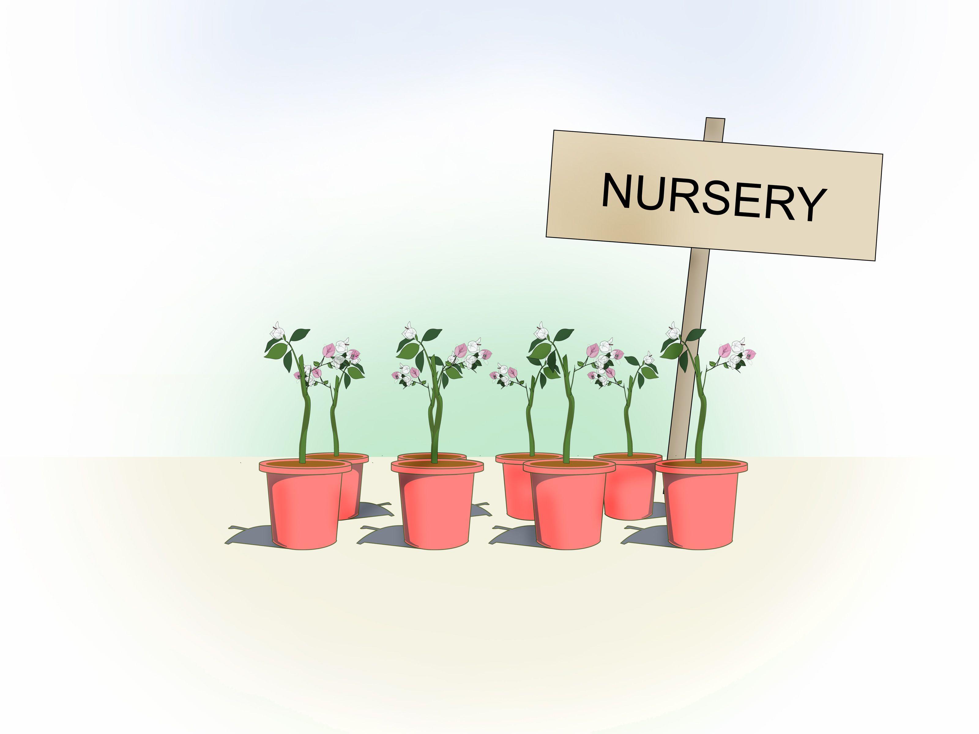 Propagar bugambilia vivero de plantas plantas for Vivero plantas tropicales