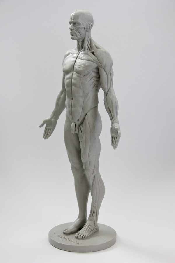 Review: 3D Total Male Anatomy Figure | Blender Cookie | Anatomical ...