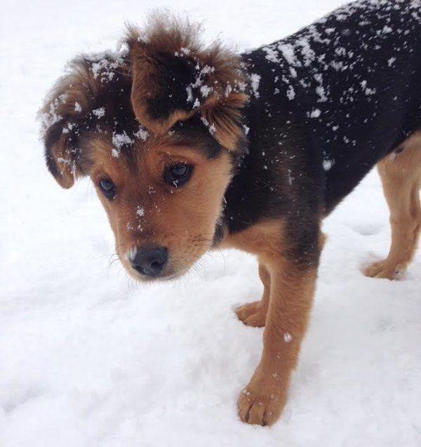 Animal Baby Pix On Animals Dogs Puppies Rottweiler