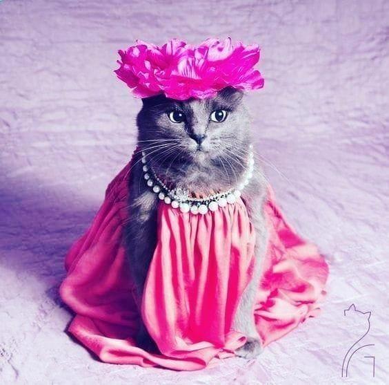 #instagram  #travel  #tutorial  #justinbieber  #arianagrande  #selenagomez  #dogs  #cats  #cat  #dog...