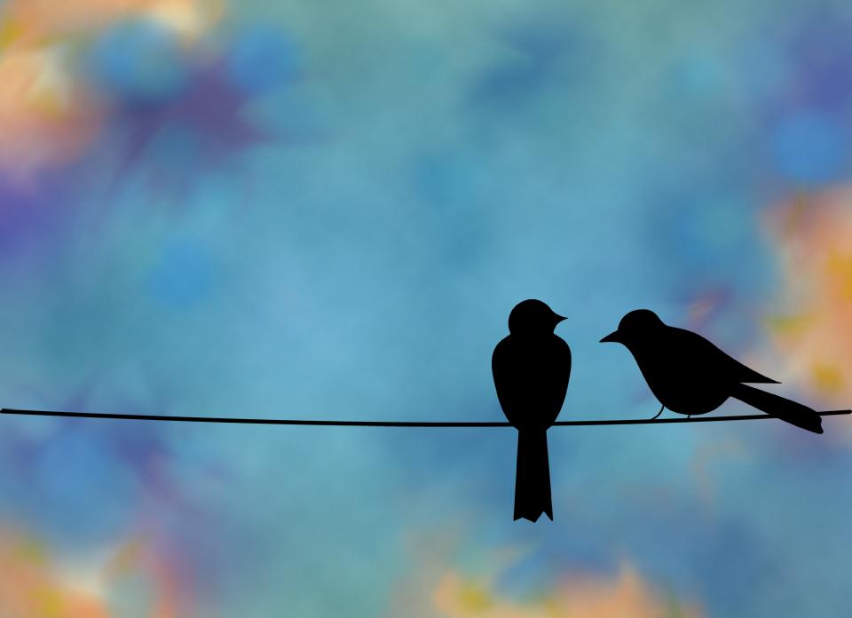 birds on a wire - Google Search | Pajaros | Pinterest | Bird