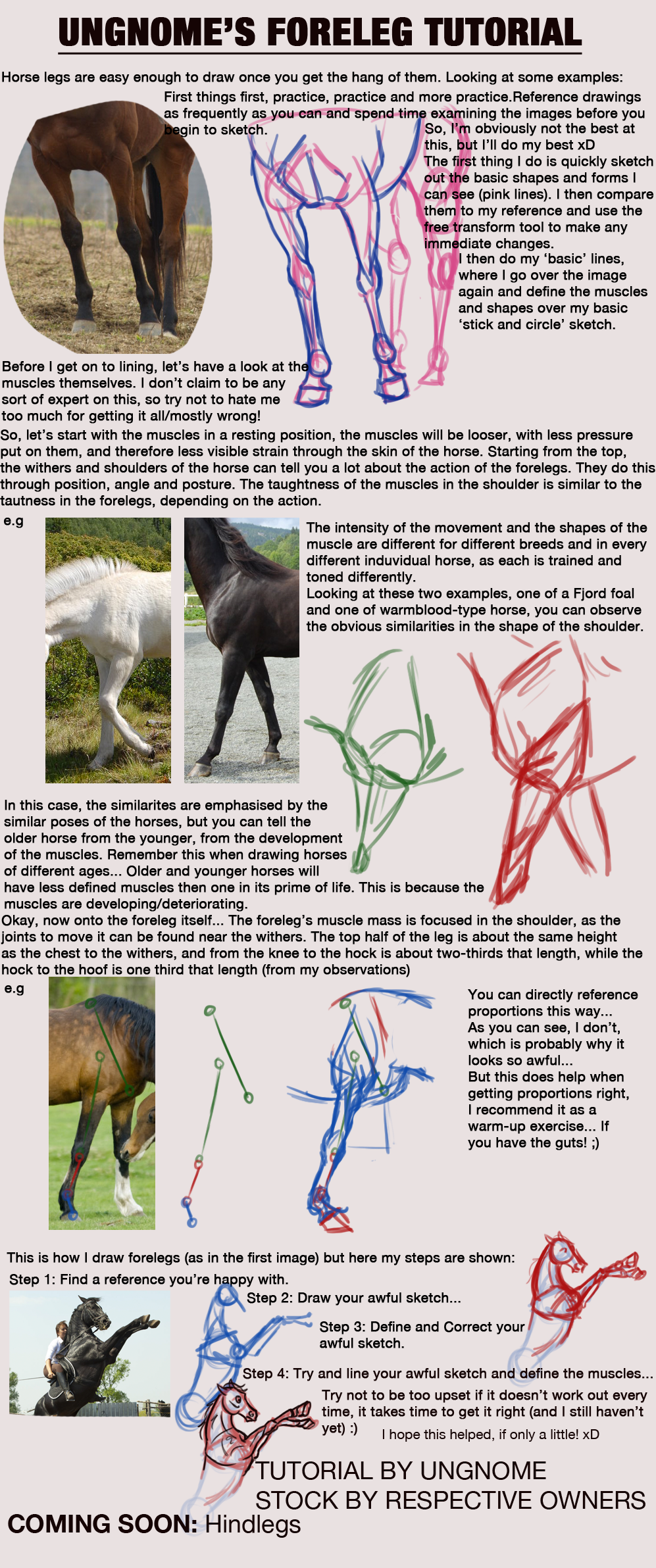 Foreleg Anatomy Tutorial by Ungnome on DeviantArt | Drawing ...