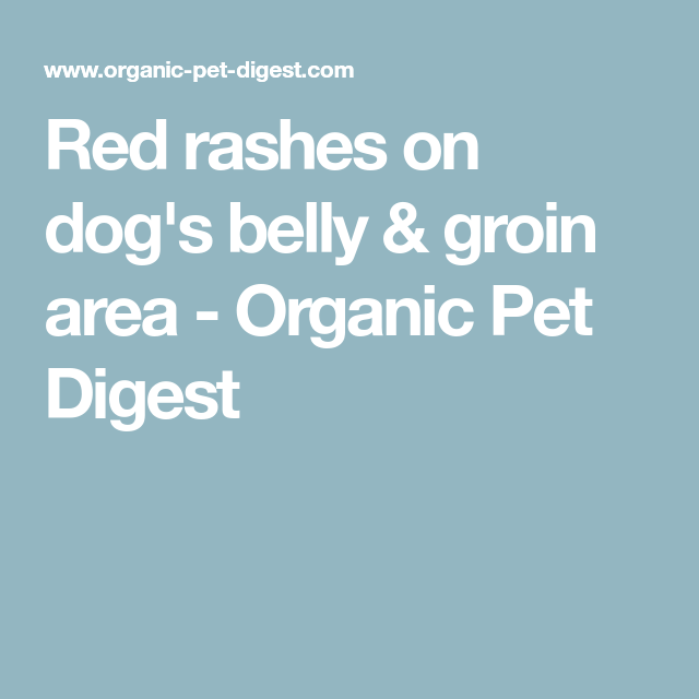 Red Rashes On Dogs Belly & Groin Area Organic Pet Digest