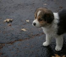 Inspiring picture adorable, animal, baby, cute, cutie. Resolution: 500x333 px. Find the picture to your taste!